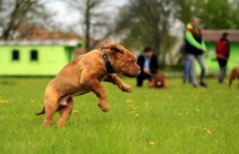 Dog Park Dos And Don'ts: How to have a successful trip to your local dog park