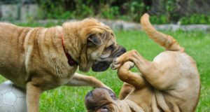 How Important Socialization Is To Your Canine Friend?