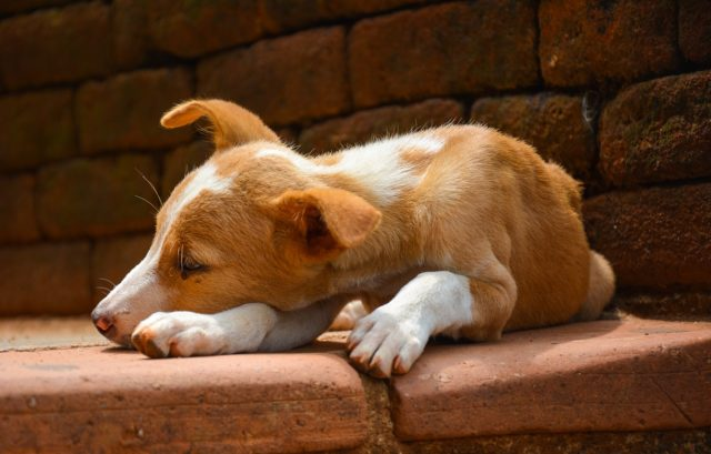 Six Ways You Can Annoy Your Dog - Unintentionally