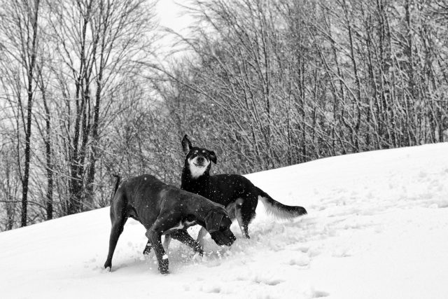 Two beautiful dogs communicating with each other in the snow