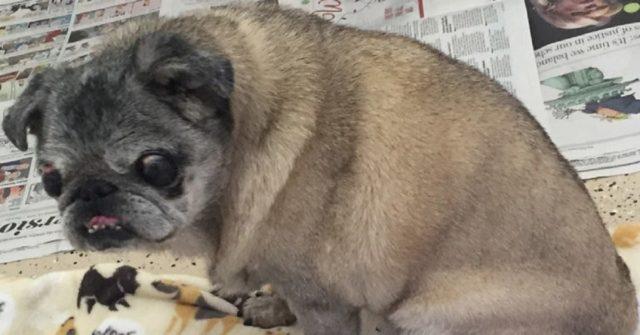 Ohio Woman Abandons Her Dog In Walmart Parking Lot
