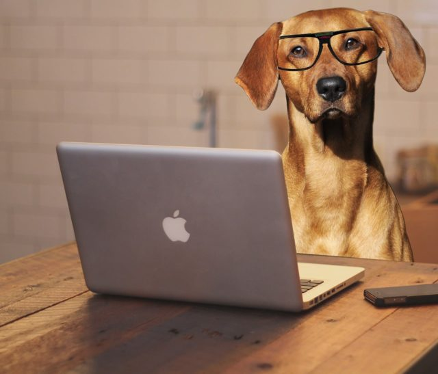7 Signs To Know If Your Dog Is Smart
