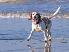 10 Human Foods That Dogs Can Eat