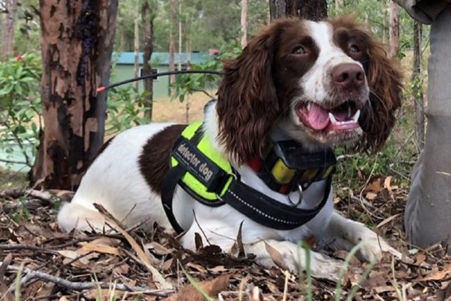 Trained Dogs Help Save Water Resources By Finding Leaks