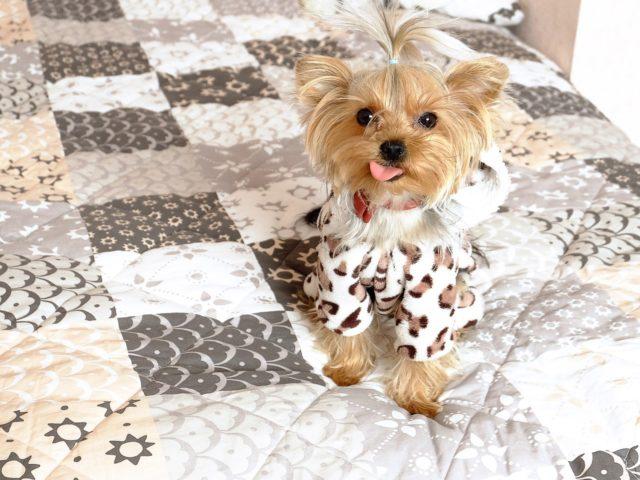 Artistic Dog Lover Crafts Miniature Pets