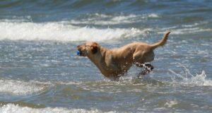 Dog Saves Owner's Life From Shark Attack