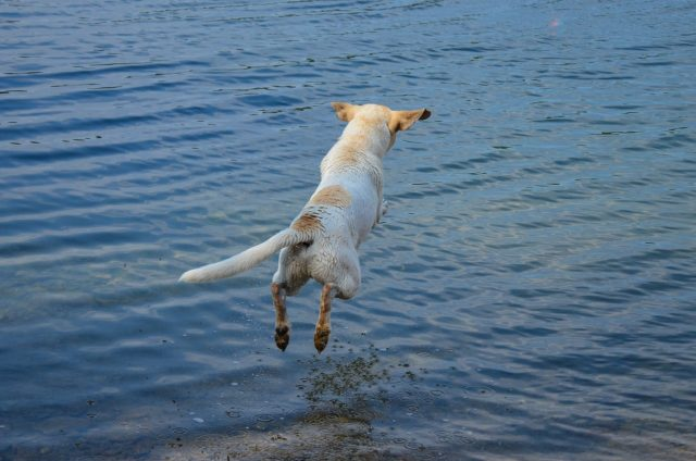 Adorable Puppy Plays Dead To Avoid Going Swimming In The Lake