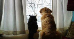 Golden Retriever and cat are best friends