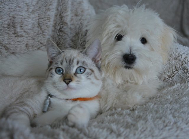Dog And Cat Neighbors Become Best Friends
