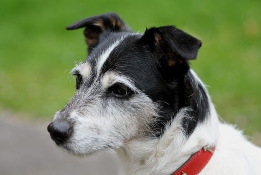 Dog Stays With Dead Man Until Help Arrives