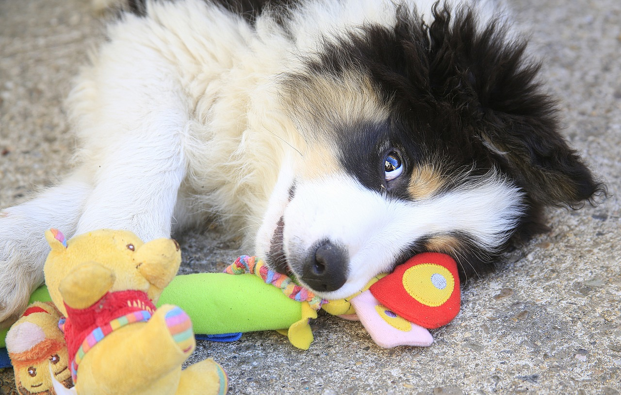 Clever dog knows names of 100 toys