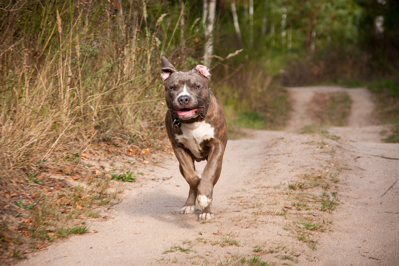 Pit Bull Stuck On The Roof Becomes So Happy To Get Rescued