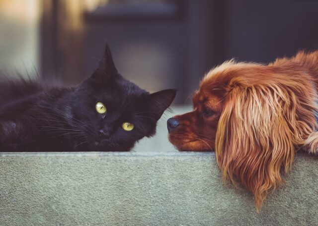 Travel Buddies: Dog And Cat Go On Adventures Together