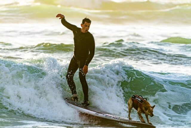 Man surfing with his dog at the dog beach in Huntington - Surf City USA - photo by Guy Kawasaki from Pexels