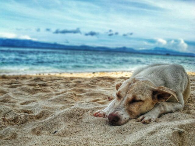 dog beaches in fort lauderdale