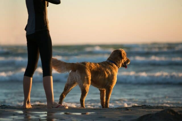 Dog with a lady on a dog beach in New Jersey